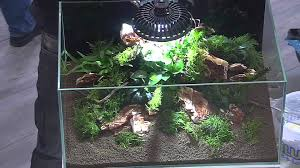 Interzoo 2012: Aquascaping Made By Oliver Knott 2. Aquarium Teil 2 ... Aquascaping Artist Oliver Knott Scapingaquarium Pinterest Schwimmende Stein Steine Im Aquarium By Knott Youtube Aquascapi Sequa Interzoo 2012 Feat Chris Lukhaup Live Part 3 The Island Aquascape Step Aquariology With At The Koelle Zoo Heidelberg New Project Photo Editor Online And Editor Made Teil 1 Inspiration Tips Tricks Love Aquascaping Octopus Aquarium Via Aquac1ubnet