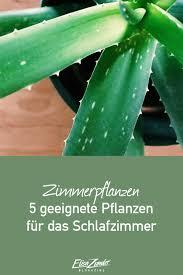 pflanzen im schlafzimmer 5 geeignete pflanzen in 2021
