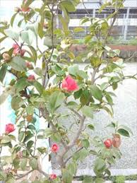 bureau de change avenue de l op駻a ガーデンカメリア あなた思いの庭つくり 今日から4月