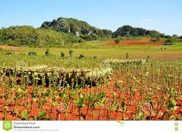 Download Vinales Valley And Its Tobacco Fields Cuba Stock Image