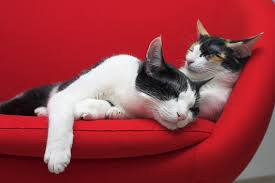 odeur de pipi de sur canapé éliminez définitivement l odeur d urine animale sur votre divan