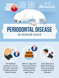 Small Non Shedding Dogs For Seniors by Periodontal Disease In Senior Dogs Canna Pet