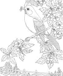 Bird Flowers Coloring Pages For Kids BBQ