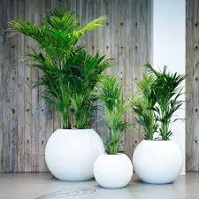raumbegrünung innenraumbegrünung baumhaus pflanzenpflege