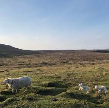 100 Colbost Highland United Kingdom Medias On Instagram Picgra
