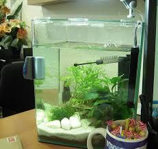 que mettre dans un aquarium 2 litres aquariums et vivariums