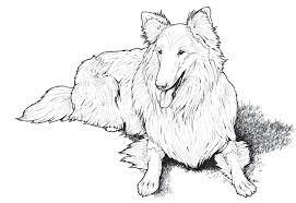 Free Download Coloring Pages From Popular Adult Books Inside Dog For Adults