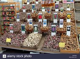 flower bulbs for sale in the bloemenmarkt flower market in stock