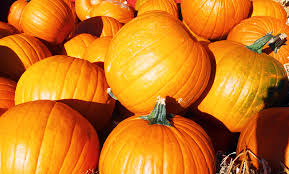 Highwood Pumpkin Fest Hours by Best Fall Activities For Families In The Us Traveling Mom