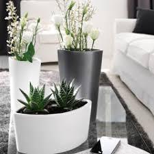 scheurich cache pot pot pour plante intérieur jardinerie truffaut