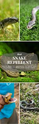 Best Snake Repellent: Read-Worthy Reviews To Help You Choose The ... Diamondback Water Snake Indiana 1 Yard Long Youtube Snake Trap Cahaba Ewww Snakes 6 Tips To Keep Them Away From Your Home How A 14 Steps With Pictures Wikihow In The Duck House 9 Tips Help Repel Snakes Fresh Eggs Best Way Ive Found Yet Deal Problems Backyard Removal Wildlife Services Of South Florida Catch Deadly Safely Out Louisiana Department And Fisheries