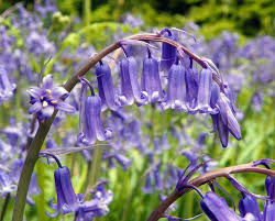 flower bulbs uk garden bulbs for sale buy wholesale
