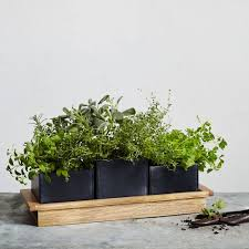 Wood Chalkboard Herb Planter Set