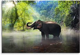 sinus wandbild 120x80cm tierfotografie elefant kanchanaburi provinz thailand auf leinwand für wohnzimmer büro schlafzimmer ferienwohnung