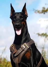 doberman protection dogs where to find the best guard dogs