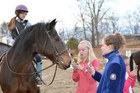 Best Horse Shedding Blade by Bramblewood Stables Live U2013 Love U2013 Learn