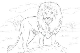 Coloring Pages Lion Free Of Lions Tigers Mountain