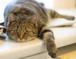 mon fait pipi sur le canapé mon fait pipi sur le canapé antique concernant mon fait