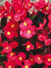 Pot Plants For The Bathroom by The Easiest Annuals To Plant For Color All Summer Long Diy