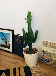plantgang livingchallenge livingroom wohnzimmer