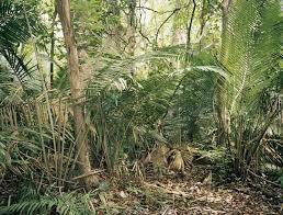 amazonia si e social in the forest ruins e flux architecture e flux