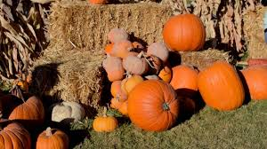 Pumpkin Patch Utah by Corn Mazes And Pumpkin Patches Near Salt Lake City 2017 Axs