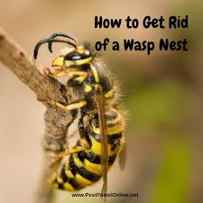 how to get rid of wasp nest in roof roof sdelka co