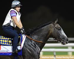 Dana Barnes And Her 'Deal' With Dubai World Cup Favorite Arrogate ... Grammy A Custom Shoe Concept By Dana Barnes Edd On Twitter Wow I See Exllence At Comanche Studio Absolutely Love Edwillkie Amazing Learning Happening Trulymagnificent Love Seeing Huskerdana Bbara Livingston Champion Arrogate Up Exercise Rider Rides Arrogate Center Their Way To Danabar43389042 Clockers Corner Cupid Under This Am