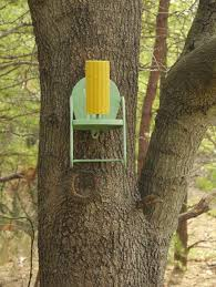 Squirrel Feeder Adirondack Chair by Squirrel Feeder Chair Patio Chair Squirrel Feeder I 39 M Just