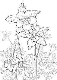 Rocky Mountain Flower Columbine Coloring Page