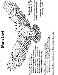 Free Barn Owl Coloring Page Picture Print
