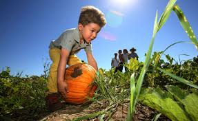 Tucson Pumpkin Patch 2017 by Photos Marana Pumpkin Patch And Farm Festival News Tucson Com