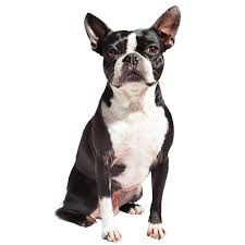 Low Shed Family Dog Breeds by Small Dog Breeds Types Of Small Dogs Breed Information