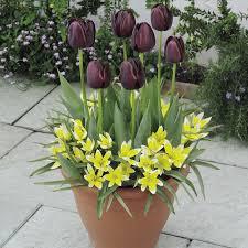 garden design garden design with best time to plant tulips when