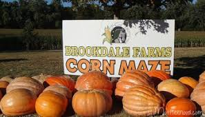 Rombachs Pumpkin Patch Hours by Our Favorite St Louis Pumpkin Patches