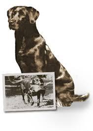 Eddie Bauer Dog Beds by Sport Shop Hunting Dogs Eddie Bauer