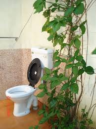Plants In Bathroom Feng Shui by Bathroom Plants For Bathrooms Decorating Design Gorgeous Indoor