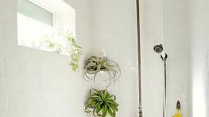 Best Plant For Windowless Bathroom by Bathroom Plants Forrooms With Low Lightroom Moldplants No