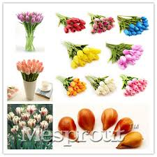 2pcstrue color mixing tulip bulbs not tulip seeds tulips variety