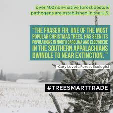 Fraser Christmas Tree Care by Cary Institute On Twitter