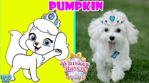 Pumpkin Palace Pet Uk whisker haven tales with the palace pets in real life youtube