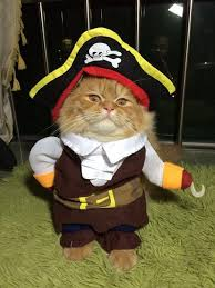 costume for cat best costumes for cats fluffy kitty