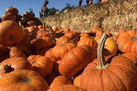Pumpkin Patch Miami Lakes by San Francisco Homes Neighborhoods Architecture And Real Estate