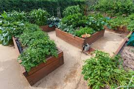Best Plant For Bathroom Australia by Vegetables To Grow In Winter Hipages Com Au