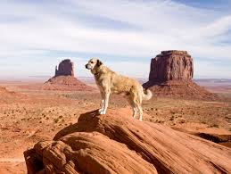 Big Dogs That Shed The Least by 20 Biggest Giant Dog Breeds Largest Dog Breed Photos