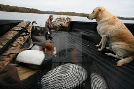 100 Truck Dog In Bed As Hunters Load The License Download Or