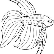 Betta Fish Coloring Page Kids Drawing And Pages Marisa