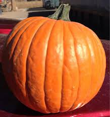 Pumpkin Patch Pueblo County by Vic Mauro Produce Fruits U0026 Veggies 1037 35th Ln Pueblo Co