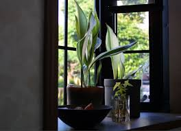 Best Plants For Bathroom No Light by 173 Best New House Bathroom Images On Pinterest Bathroom