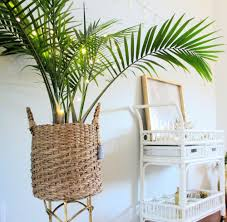 How To Care For An Indoor Majesty Palm — House Full Of ...